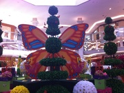 7th Mar 2015 - Beautiful Butterfly