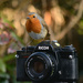 Robin on a Ricoh by richardcreese
