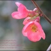 Spring by jamibann