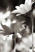 9th Mar 2015 - flowers
