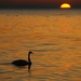 Greeting the Dawn by selkie