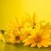 (Day 24) - Say 'Yellow' to Spring by cjphoto