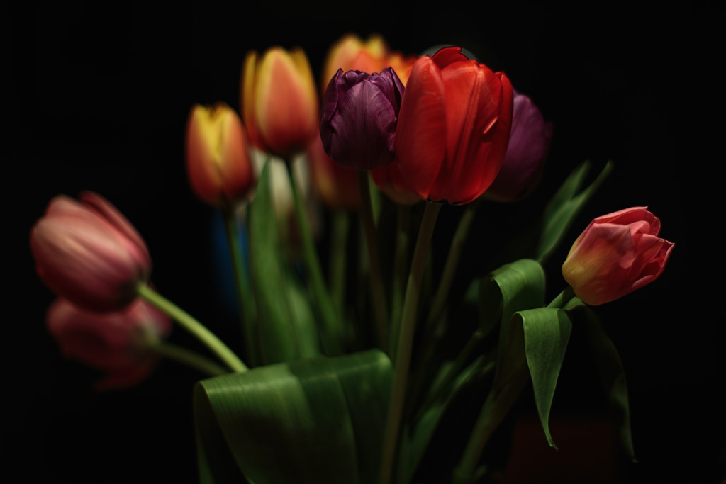 Spring Has Arrived.  Tulips From Pike Place Market. by seattle