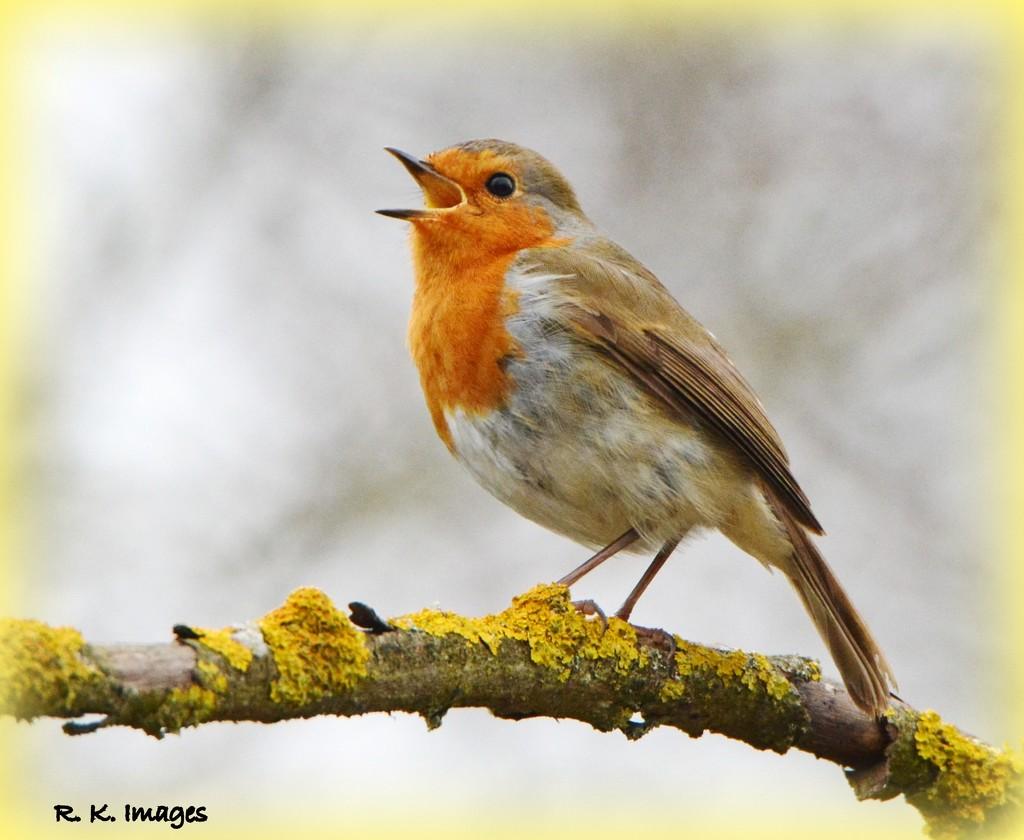 Happy robin by rosiekind