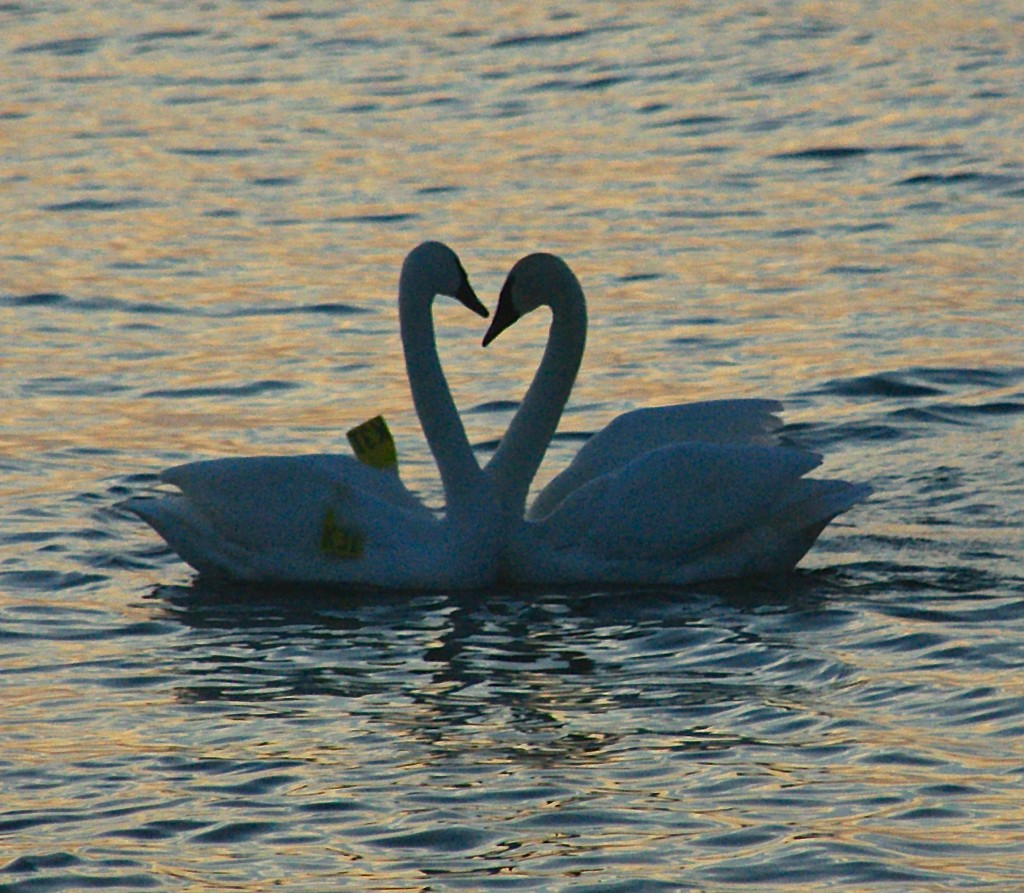 Love is In the Air by selkie