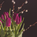 Tulips & Pussys by tracymeurs