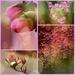 Pink Bokeh by nanderson