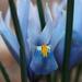 Mailbox Iris by khrunner