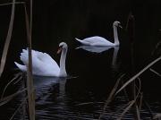 4th Nov 2010 - Swan Lake.