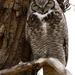 great horned owl by mjalkotzy