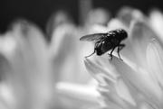 17th Mar 2015 - fly