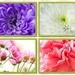 Marco Flowers by bizziebeeme