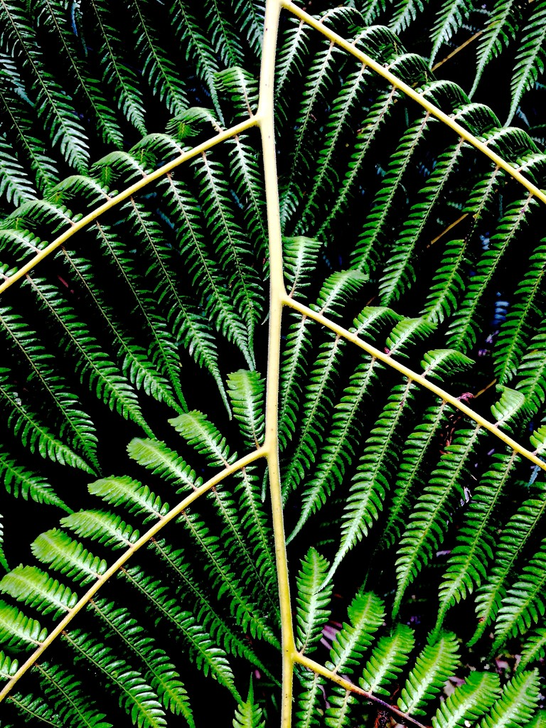 Green by brigette