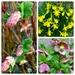 spring colours in my garden by gijsje
