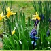 Flowers in my spring garden