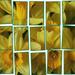 Photo Mosaic by bizziebeeme