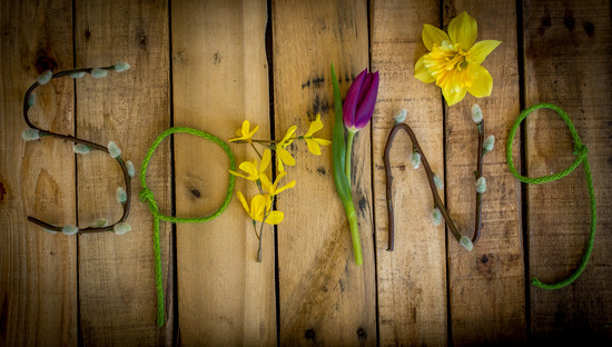 Spring is Here! by tracymeurs