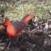 Mr. Cardinal came calling