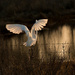 Runaway egret by shesnapped