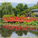 NEW Theme! Water Lily Farm #1 by gigiflower