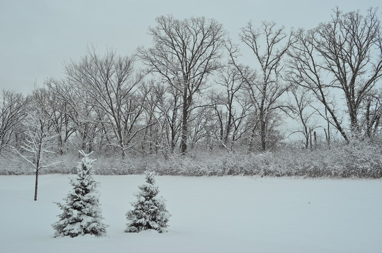 Springtime in Minnesota by cailts