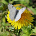 First butterfly of the season by cjwhite