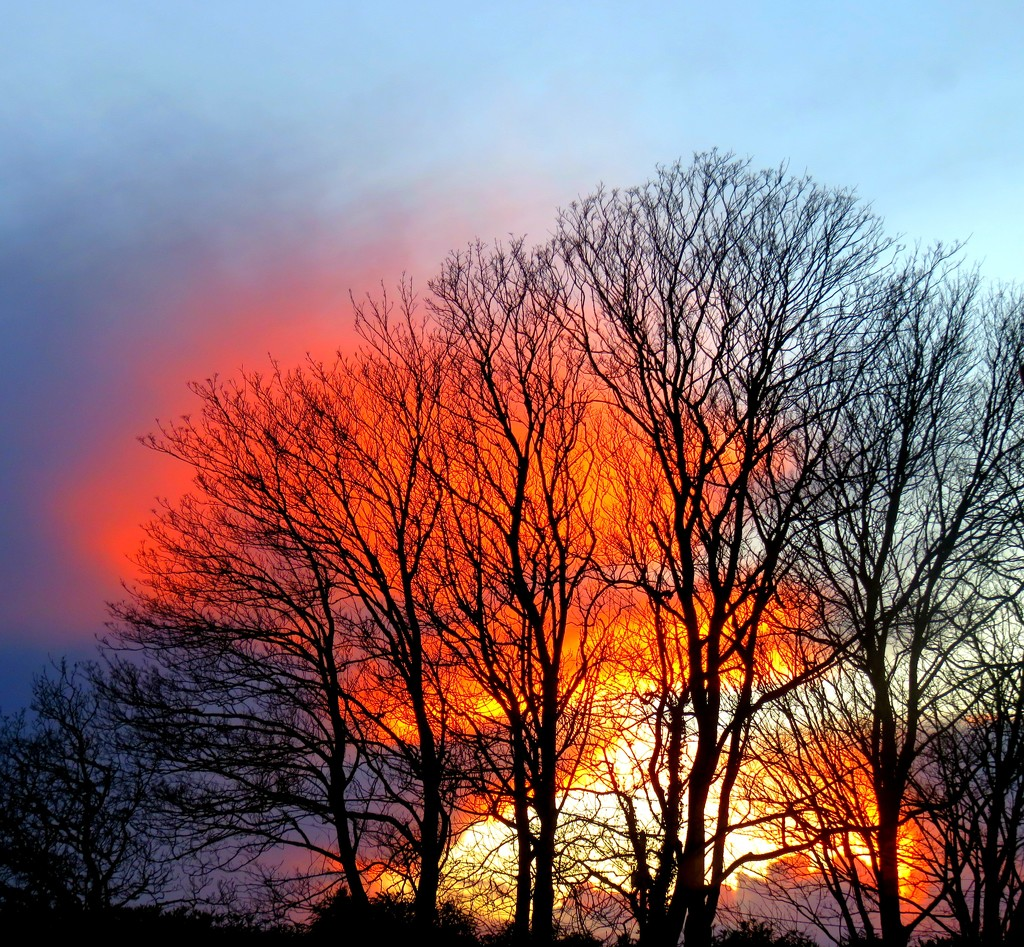 Trees on fire  by countrylassie