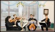 24th Mar 2015 - The Kuttner String Quartet