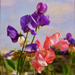 Sweetpeas ( in oil ) by joysfocus