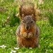 Never Pass Up a Squirrel Shot!