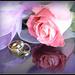 Wedding Anniversary.. by julzmaioro