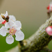 2015 03 27 - Hello Blossom by pixiemac