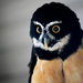 Spectacled Owl! by fayefaye