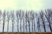 30th Mar 2015 - Line of trees