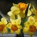 of daffodils and lions