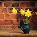Daffs in a Vase by newbank