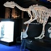 18/09/2009 - The Rachosaurus