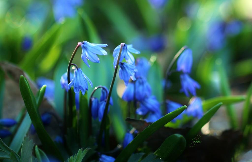 Happy April  by lynnz