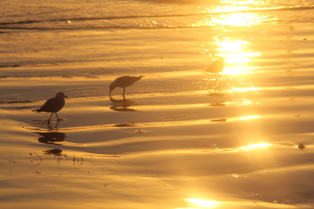 On golden sand by gilbertwood