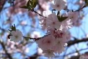 3rd Apr 2015 - My Heart Sings Of Spring