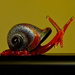 RED SNAIL by markp