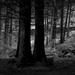 In the woods by overalvandaan