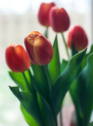 3rd Apr 2015 - Get well tulips