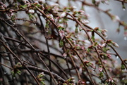 3rd Apr 2015 - The Promise of Spring