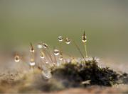 4th Apr 2015 - Those drops are so heavy.....