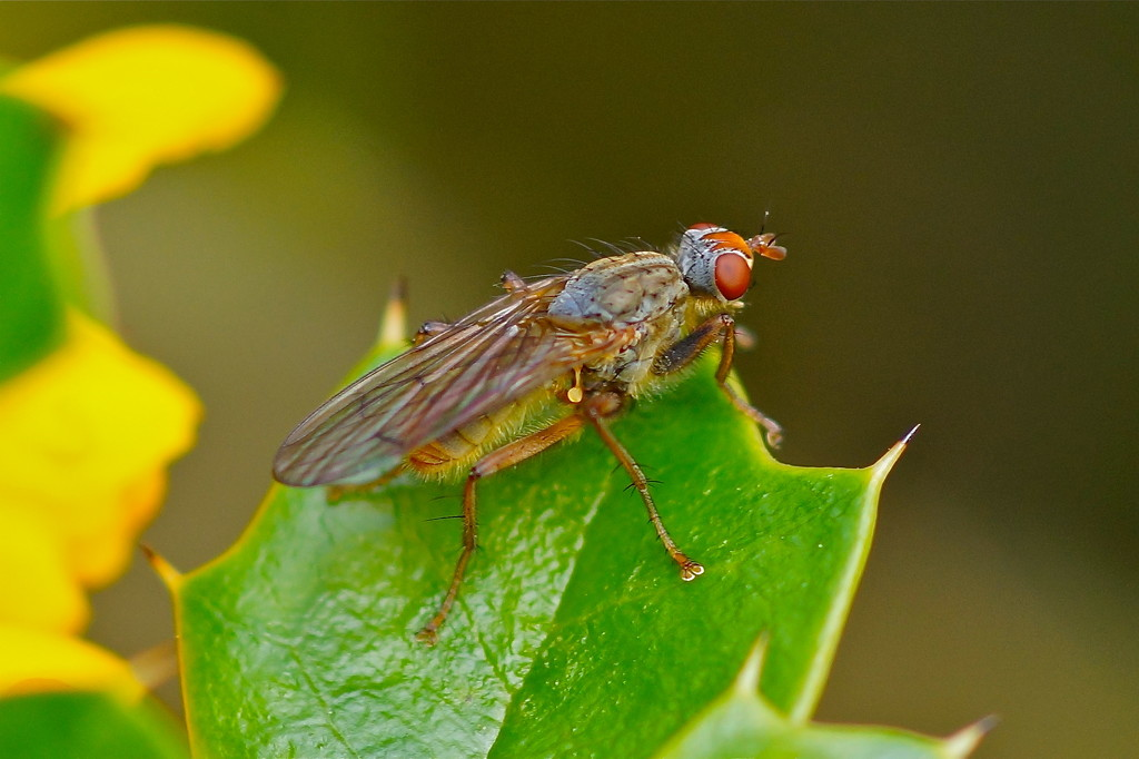 RESTING FLY by markp
