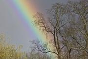 1st Apr 2015 - Rainbow
