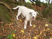 6th Nov 2010 - My walking companion .