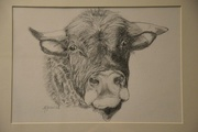 1st Apr 2015 - Drawing of the bull
