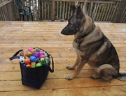 """2nd Apr 2015 - """"Here's the Eggs But Where's That Bunny!"""""""